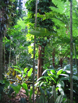 rainforest_02 (269_358)
